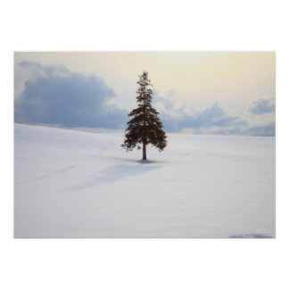 Pine tree, Hokkaido Poster