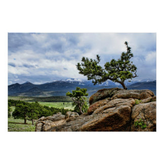 Pine Tree in Rocky Mountain National Park Poster