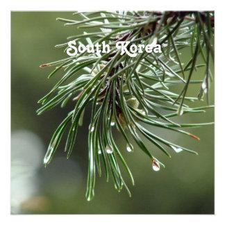 Pine Tree Announcement