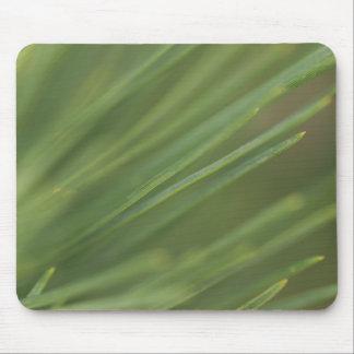 Pine Tree Needles Mouse Pad
