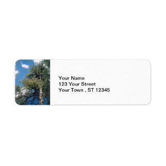 Pine Tree Return Address Label
