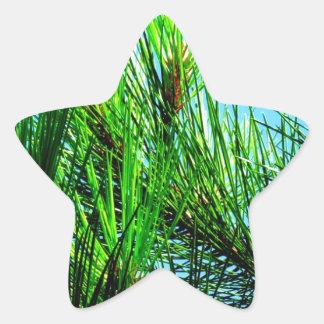 Pine Tree Star Sticker