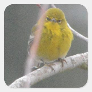 Pine Warbler Bird Nature Peek A Boo Square Sticker