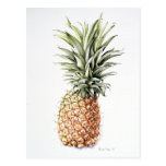 Pineapple 1997 postcard