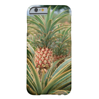 Pineapple Field Barely There iPhone 6 Case