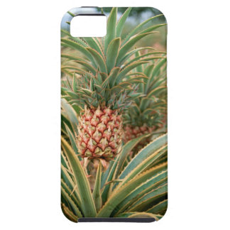 Pineapple Field Case For The iPhone 5