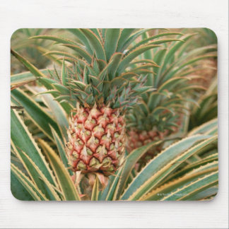 Pineapple Field Mouse Mat