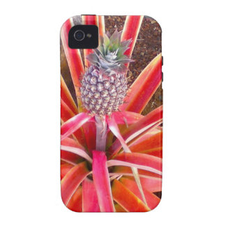 Pineapple Plant in Hawaii iPhone 4/4S Cover