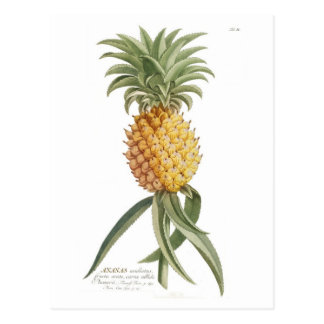 Pineapple Postcard