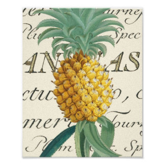 Pineapple with calligraphic detail poster
