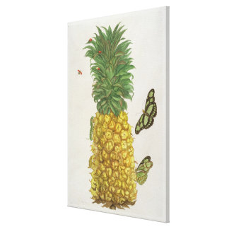 Pineapple with caterpillar and butterflies (hand-c stretched canvas print