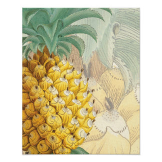 Pineapple with enlargement print