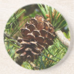 Pinecone in the sun. beverage coasters