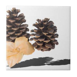 PineconesDriedFlower061315.png Tile