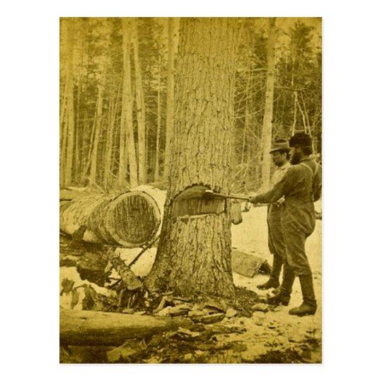Pineries of Michigan Goodridge Brothers Saginaw MI Postcard