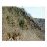 Pines amoung the Rock 10x8 Photographic Print