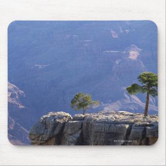 Pinion pine on canyon edge , Grand Canyon Mouse Mat