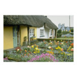 Pink Adare, Limerick flowers Posters