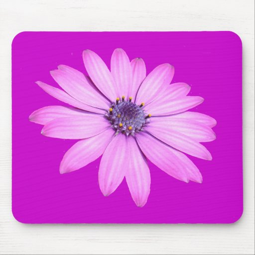 Pink Afrıcan Daisy With Transparent Background Mouse Pad