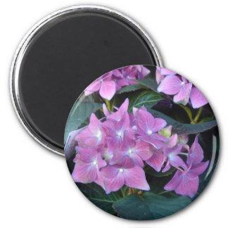 Pink African violets Refrigerator Magnets
