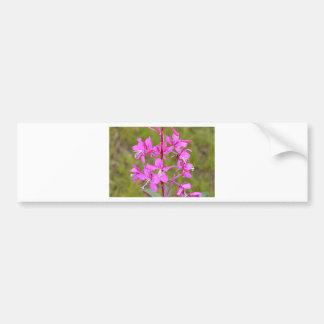 Pink Alaskan Fireweed flowers in bloom Bumper Stickers