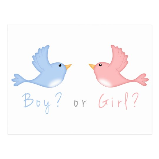 Pink and Blue Birds Gender Reveal Party Postcards
