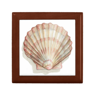 Pink and Cream Seashell Gift Box