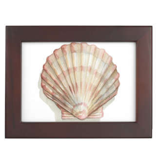 Pink and Cream Seashell Keepsake Box