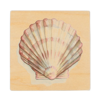 Pink and Cream Seashell Wood Coaster