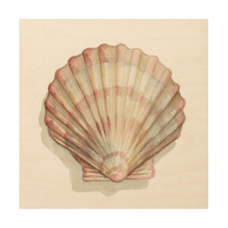 Pink and Cream Seashell Wood Print