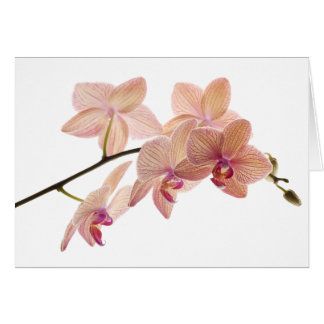 Pink and Peach Dendrobium Orchid - Customized Greeting Card