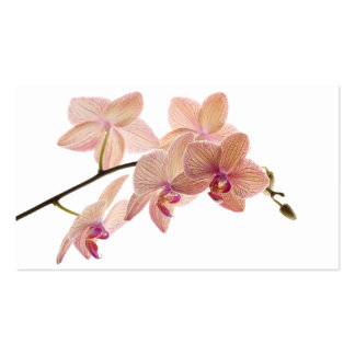 Pink and Peach Dendrobium Orchid - Customized Pack Of Standard Business Cards
