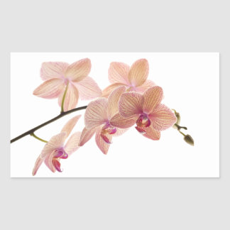 Pink and Peach Dendrobium Orchid - Customized Rectangular Sticker