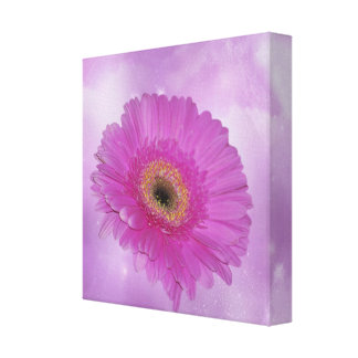 Pink and purple Gerber daisy Canvas Prints