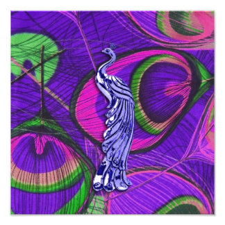 Pink and Purple Peacock Photographic Print