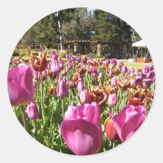 Pink and reddish brown tulips round sticker