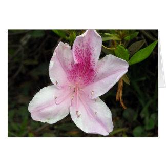 Pink and White Azalea Greeting Card