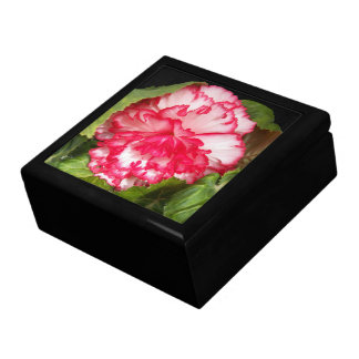 Pink and White Begonia Floral Gift Box
