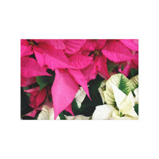 Pink And White Christmas Poinsettias Canvas Print