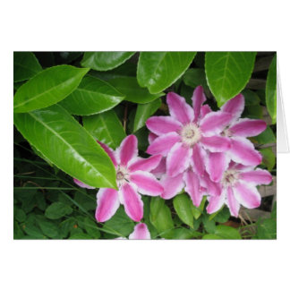 Pink and White Clematis Card