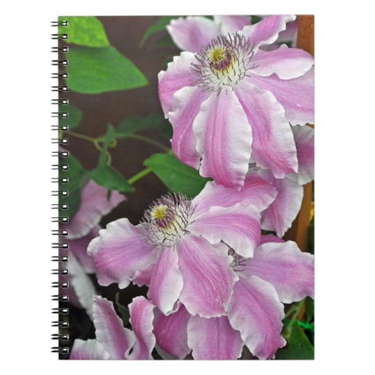 Pink and white clematis flowers notebooks