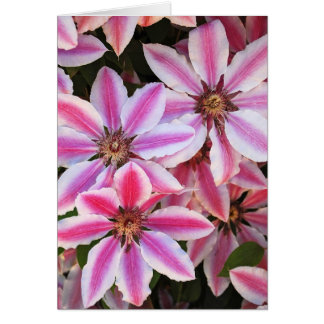 Pink and white clematis greeting card