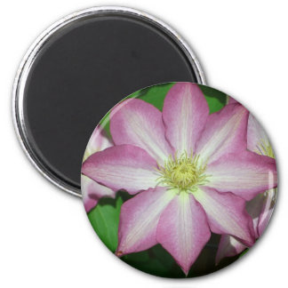 Pink and White Clematis Spring Flower 6 Cm Round Magnet