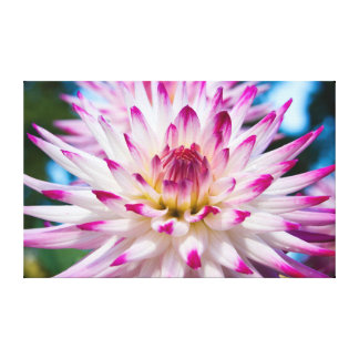 Pink and White Dahlia Canvas Print