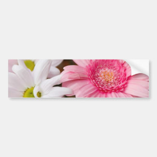 Pink and White Daisies Bumper Sticker