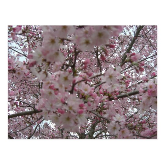 pink and white flower buds postcard