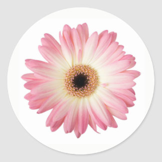 Pink and White Photographic Gerbera Daisy Flower Classic Round Sticker