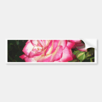 Pink and White Rose Car Bumper Sticker
