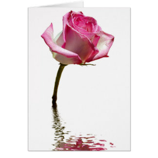Pink and white rose greeting card