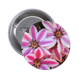 Pink and white striped clematis flowers pins
